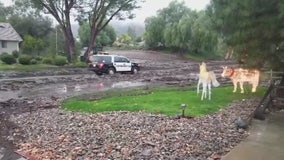 Lake Elsinore residents capture dramatic slide on cell phone video
