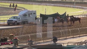 Horses will run again at Santa Anita race track
