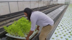 Homegrown heroes: Local vets take up urban farming in Anaheim