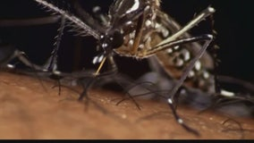 More positive tests for West Nile virus found in SF Valley mosquitos