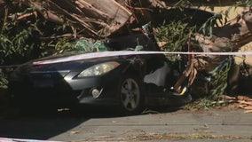 Woman killed when tree falls on vehicle in Tustin