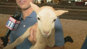 Los Angeles County Fair opens Friday in Pomona