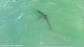 More shark sightings in San Clemente
