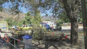 Children, teacher injured when tree branch falls on them at elementary school