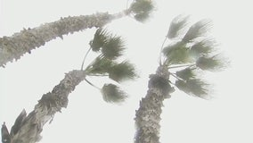 Seal Beach storm latest