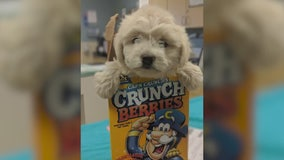 Puppy stuffed inside cereal box dropped at shelter