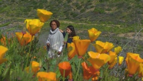 New traffic plan in place for super bloom at Lake Elsinore