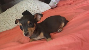 Stolen therapy dog in Palmdale