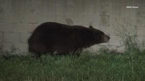 Bear kills dog in La Verne neighborhood