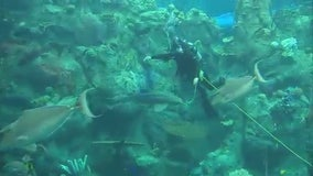 Sandra Endo swims with sharks at Aquarium of the Pacific