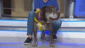 Pet Project: Rusty from San Gabriel Humane Society