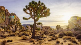 'Digital Detox Challenge': Company wants to pay someone to visit Joshua Tree without any technology