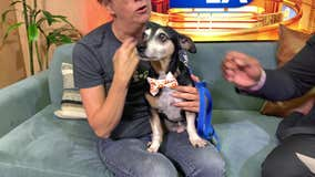 Pet Project: Blake from Best Friends Animal Society