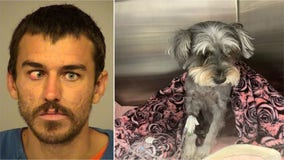 Small dog suffers collapsed lung, displaced heart after homeless man kicks her 15 feet into the air