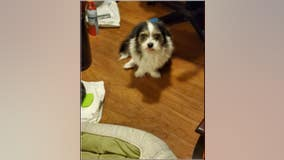 Deputies searching for therapy dog stolen from Norwalk neighborhood