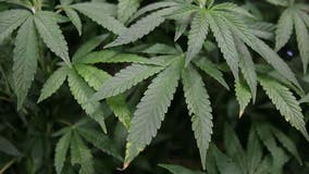 Medical cannabis on K-12 campuses approved by California Assembly