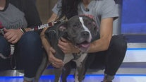 Pet Project: Keanu from Karma Rescue