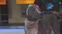 Pet Project: Sheba from Paws for Life