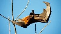 Bat found inside bike shop in Orange tests positive for rabies