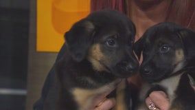 Pet Project: Sadie and Georgie from Doggie Tahiti