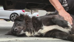 Stolen dog found dehydrated and safe in abandoned truck