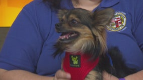 Pet Project: Pepper from Chester Field Square