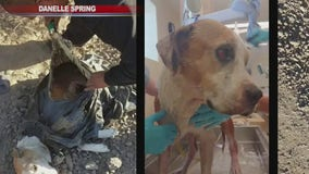 Dog found hogtied in trash bag in Gila River rescued, recovering from surgery