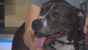 Pet Project: Adonis from NKLA Pet Adoption Center