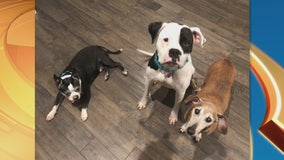 Pet Project Success Story: Bonnie and Clyde from Best Friends Animal Society