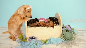 Photographer captures dog and newborn puppies in 'pawsitively' precious photoshoot