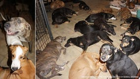 Hurricane Dorian: Woman in Bahamas houses nearly 100 dogs to protect them from storm