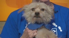 Pet Project: Dale from spcaLA