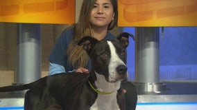Pet Project: Bella from West LA Shelter