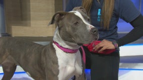 Pet Project: Sweet Pea from Paws for Life