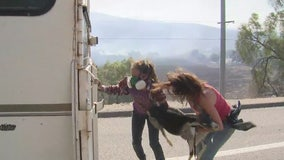Two women help rescue goats trapped by the Easy Fire in Simi Valley