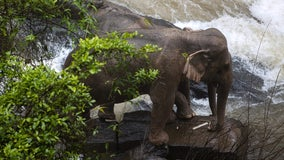 More dead wild elephants discovered at Thai waterfall; toll at 11