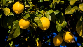 City of Oxnard wants to plant free fruit trees in residents' yards