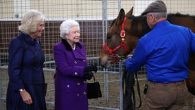 The Queen is hiring someone to live at Buckingham Palace and look after her horses