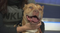 Pet Project: Hedy Lamarr from NKLA Pet Adoption Center
