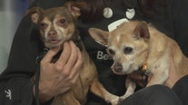 Pet Project: Jimmy and Zoey from Best Friends Animal Society