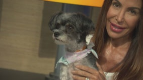 Pet Project: Lady from Karma Rescue