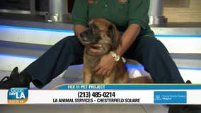 Pet Project: Mikey from LA Animal Services