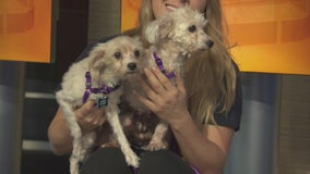 Pet Project: Talli and Melissa from Paw Works