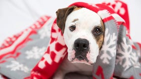 Best Friends Animal Society offers free pet adoptions on Black Friday