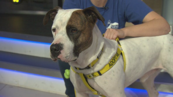 Pet Project: Chuvasco from San Gabriel Valley Humane Society