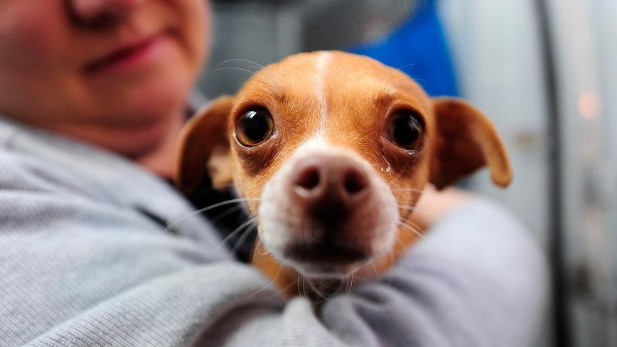 Pet food supplies low at SPCA Los Angeles