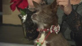 Pet Project: Hershey from Mutt Match LA