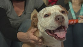 Pet Project: Beaker from NKLA