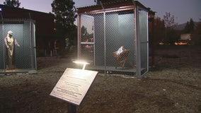 Controversial Border Wall Nativity Scene