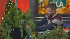 Plants make a great holiday gift -- here's how to get the designer look for less